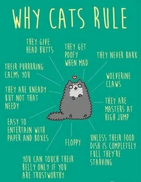 cat quotes about rules