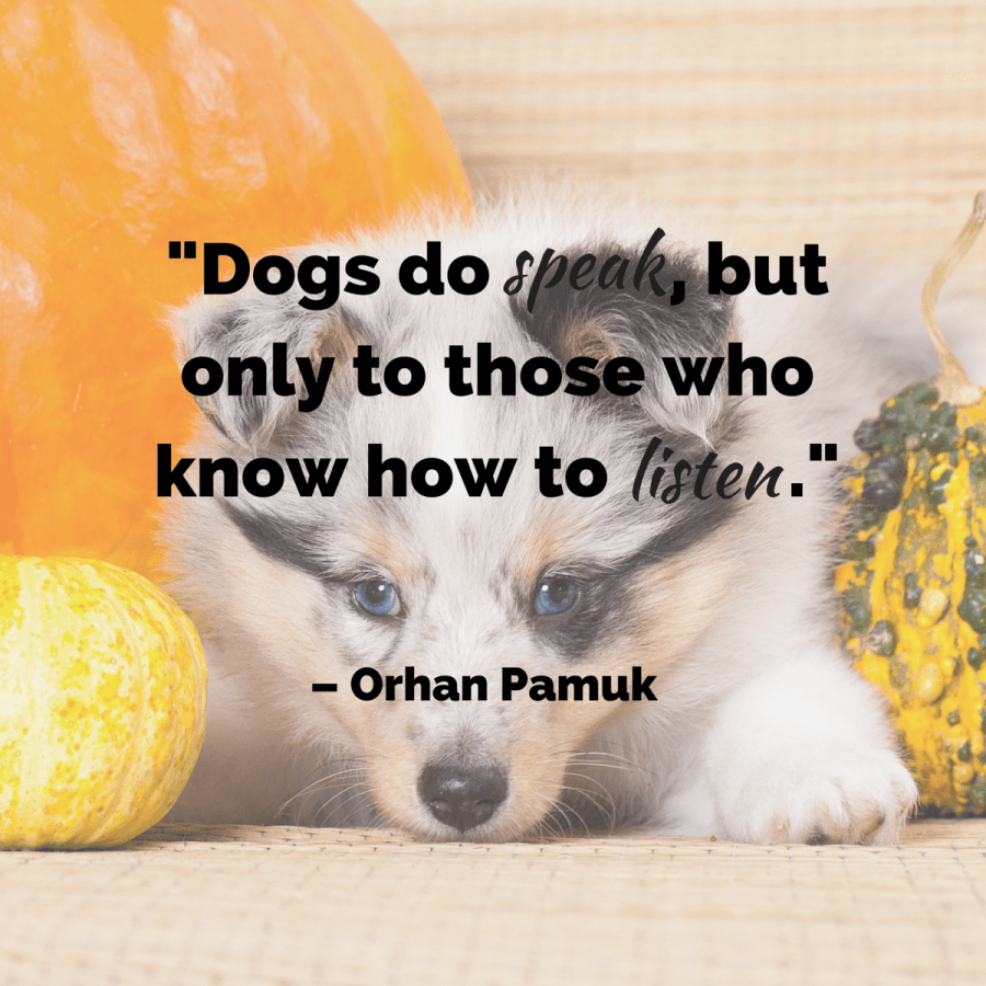 cute dog quotes and sayings