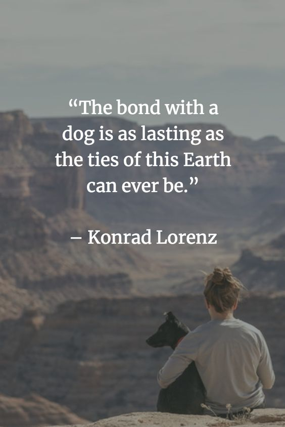 dog quotes about loyalty