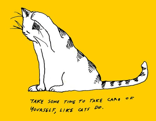 inspirational cat quotes