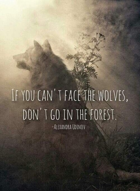 best wolf quotes
