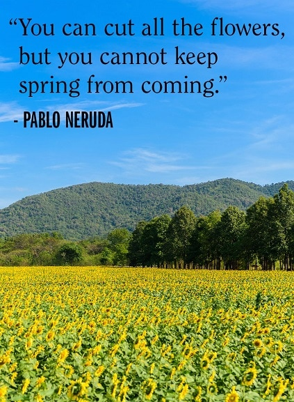spring quotes and images