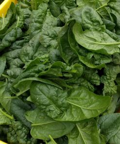 bin of green spinach leaves
