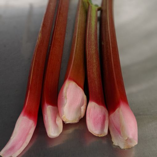 red rhubarb stalks