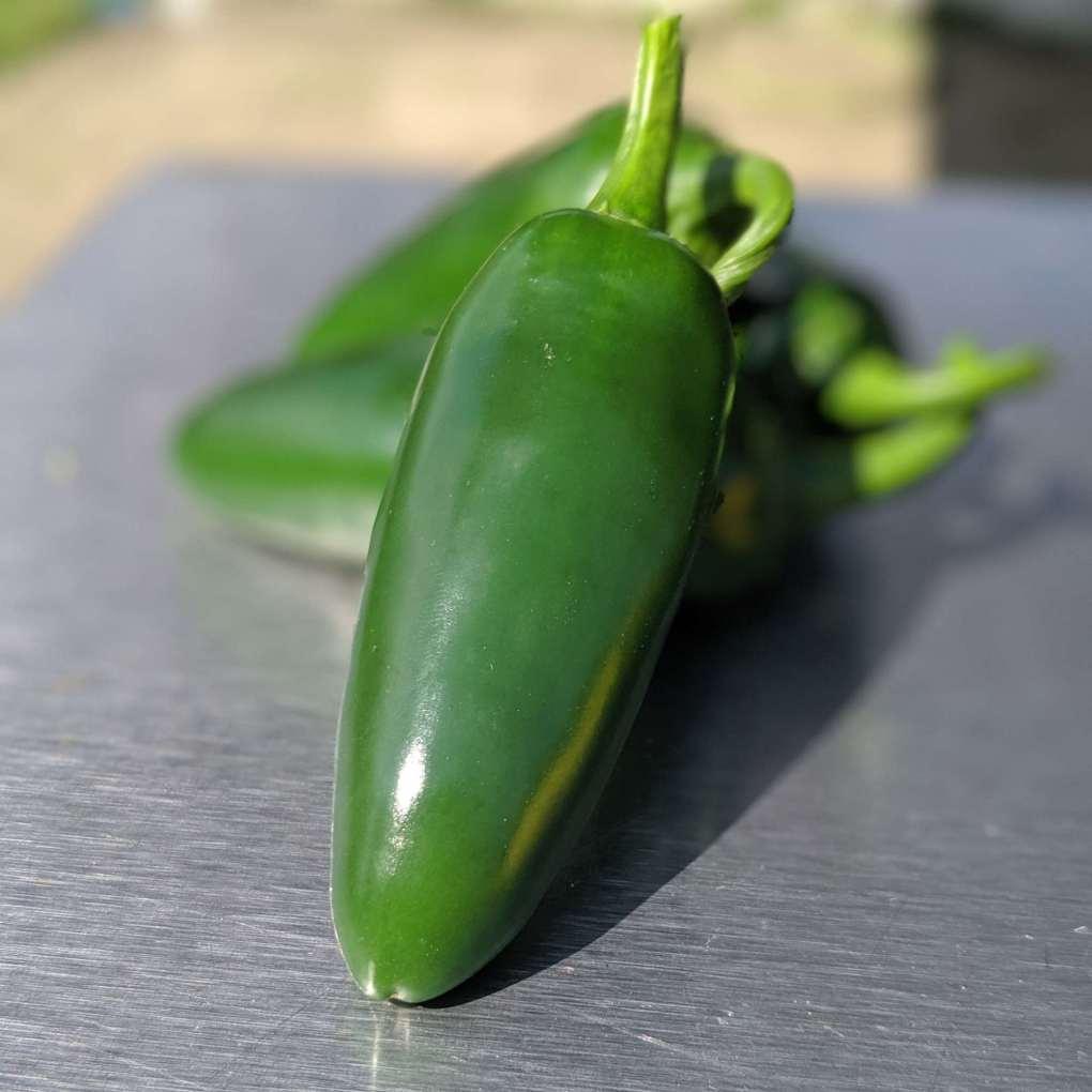 El Jefe Jalapeño Peppers Image