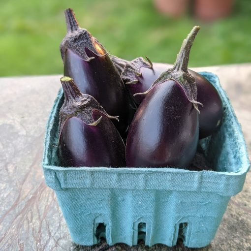 mini purple eggplant