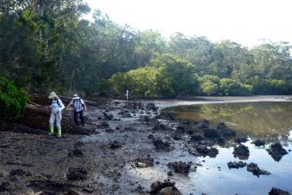 Shoreline at low tide