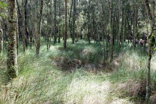 Sedgelands and casuarinas