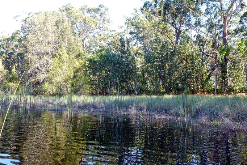 Wetland margins