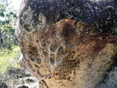 Abandoned wasp hives among granite boulders