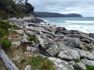 Bivouac Bay, Tasman National Park