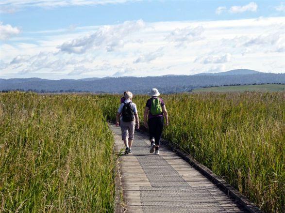Boardwalk through Tamar Wetlands to Tamar Island near Launceston