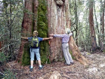 Giant tree on Shadow Lake track