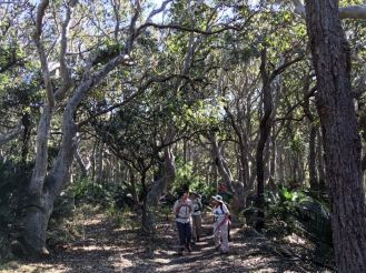 Twisted spotted gum forest nearing the coast