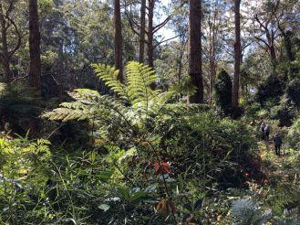 Dwarfed by lush vegetation
