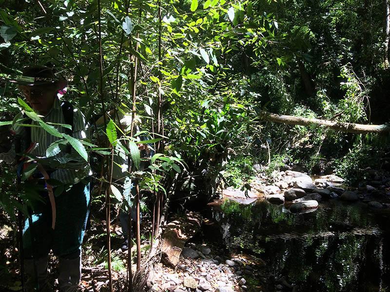Betty emerging through the 'jungle'
