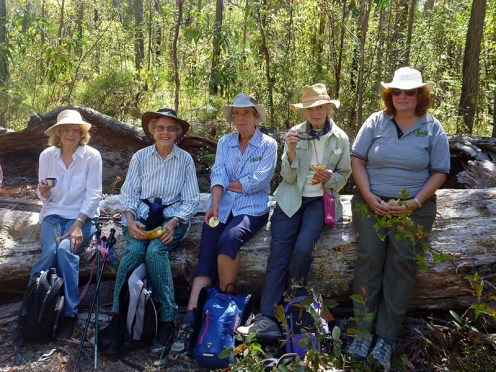 Elaine, Betty, Karen, Val and Deb taking a break in the forest