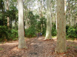 In the Spotted Gum forest