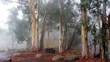 Misty morning, Mount Buffalo