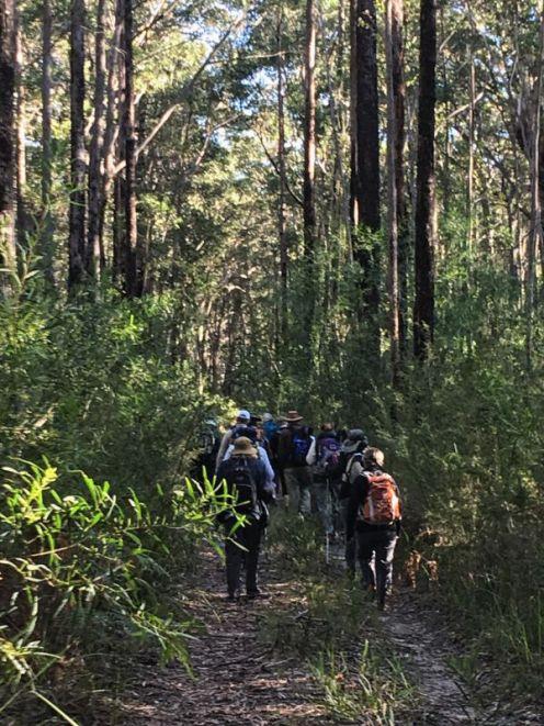 Old forest tracks