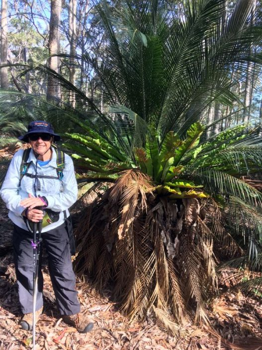 Bev dwarfed by a joint burrawang and birds nest fern