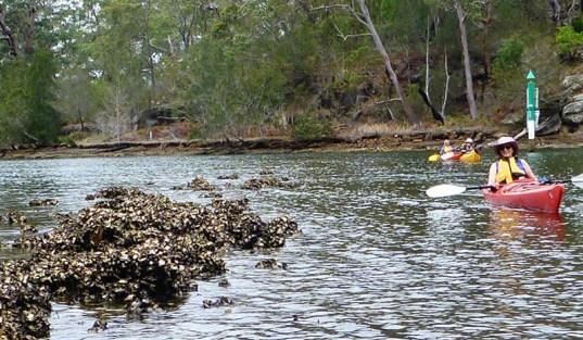 Linda admires the remains of an ancient Aboriginal fish trap.