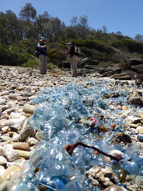 Helen and Denise near a carpet of Blue Bottles.