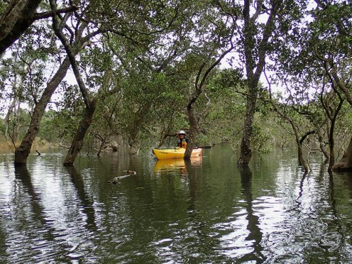 Mary meanders through the mangroves.