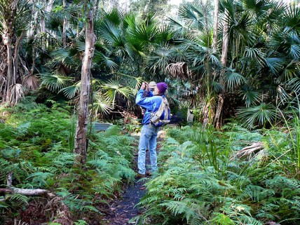 Stewart capturing the ferns and palms.