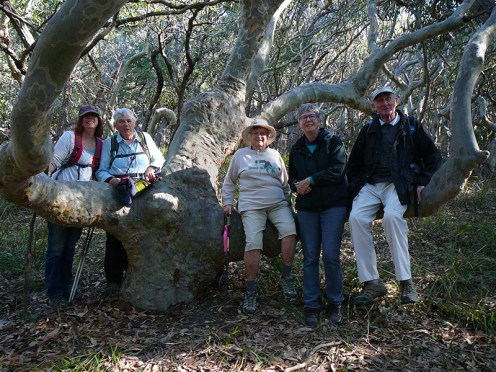 Sue, Bev Ainslie, Tessa and Mike found it hard to resist posing on this tree!
