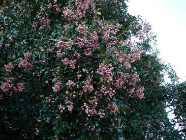 Pink Lilli Pilli.