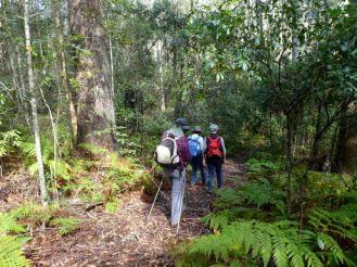 Ferny forest track
