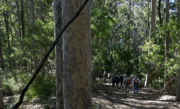 Dappled spotted gum forest
