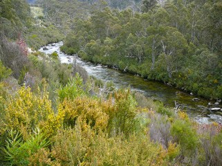 Thredbo River on the Valley Track..