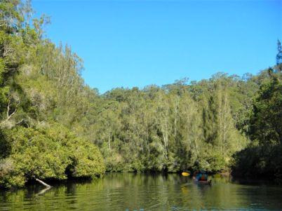 Nowra Creek tributary
