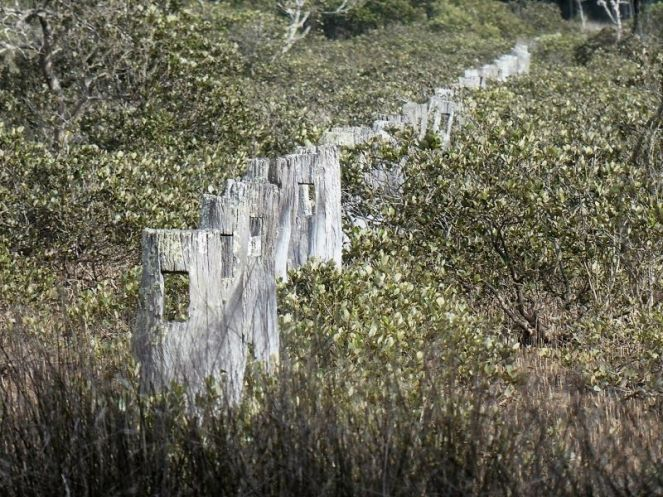 Old paddocks overtaken by mangrove