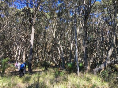 Stunted spotted gum forest