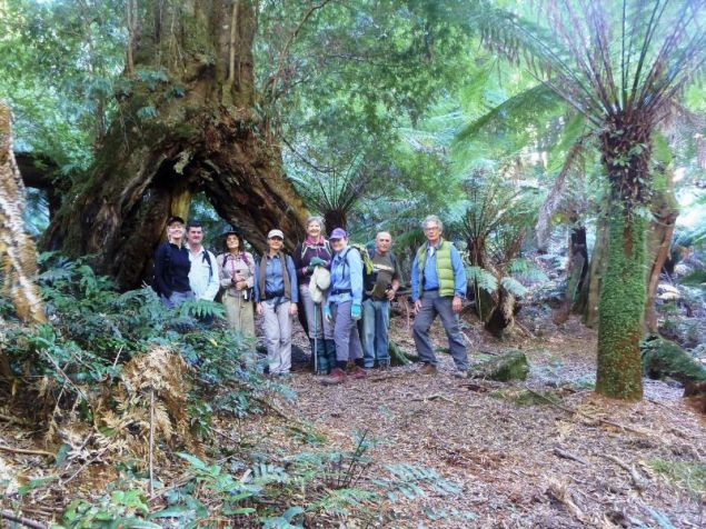 The group dwarfed by a giant pinkwood with an arch base