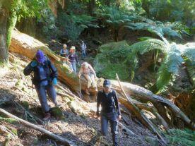 Hurdling another fallen tree