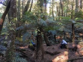 Lunch under the tree ferns