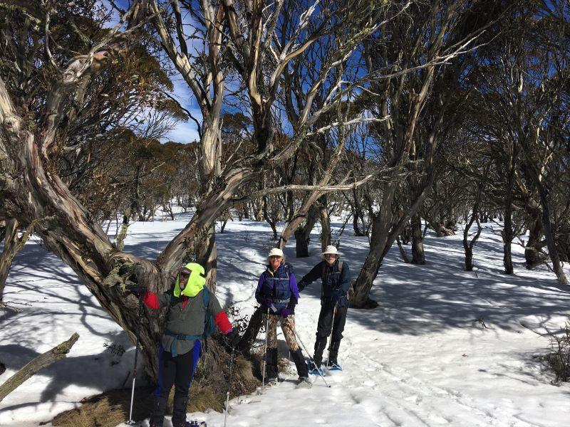 An unburned snowgum forest