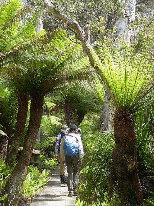 Treefern forest