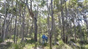 Heading into the forests of Murramarang NP