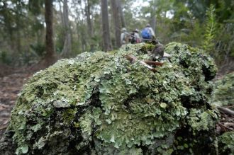 Rock covered with intricate lichen