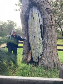 Peter and the Broulee Canoe Dig tree