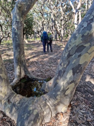 Pool in base of mallee formed Spotted Gum