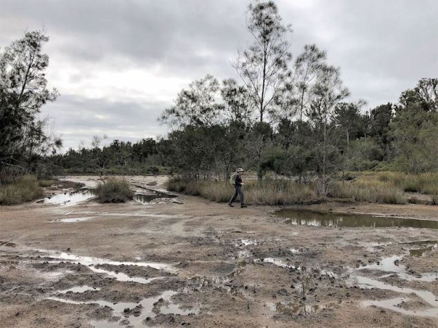 Muddy tidal flats of Waterfall Creek