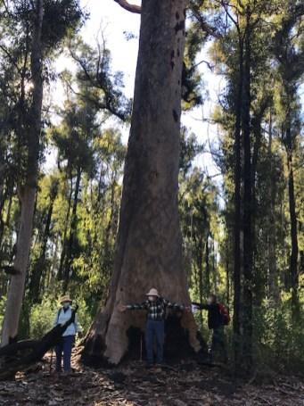 Tree hugging Covid style