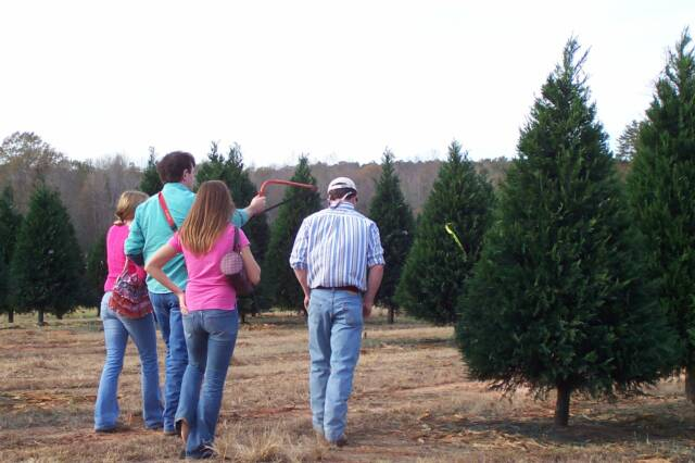 Christmas Tree Association to Meet In Gulf Shores