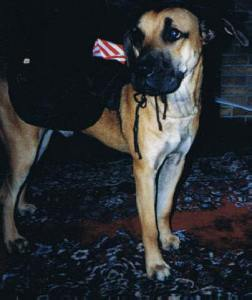 11 Leroy holloween 2002